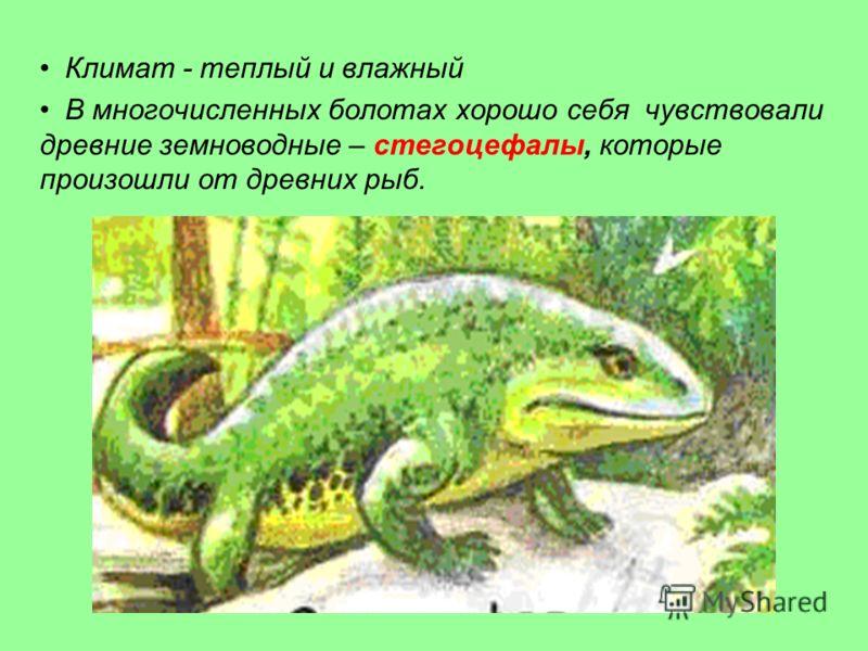 Климат - теплый и влажный В многочисленных болотах хорошо себя чувствовали древние земноводные – стегоцефалы, которые произошли от древних рыб.