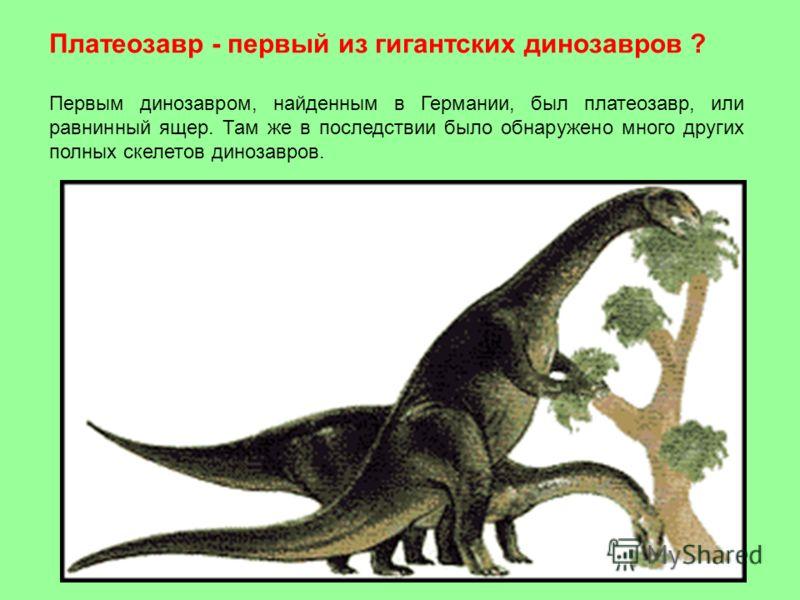 Платеозавр - первый из гигантских динозавров ? Первым динозавром, найденным в Германии, был платеозавр, или равнинный ящер. Там же в последствии было обнаружено много других полных скелетов динозавров.