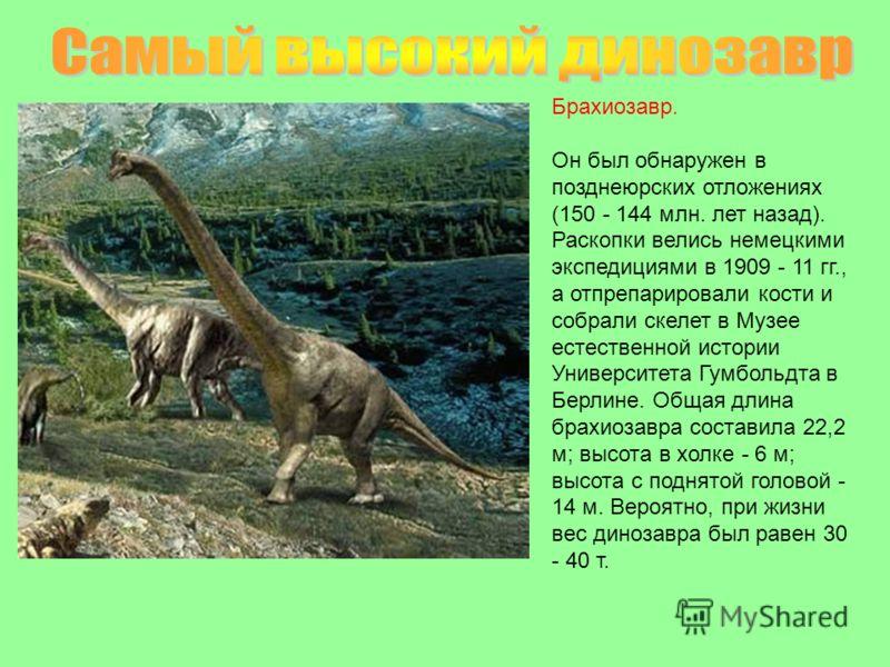 Брахиозавр. Он был обнаружен в позднеюрских отложениях (150 - 144 млн. лет назад). Раскопки велись немецкими экспедициями в 1909 - 11 гг., а отпрепарировали кости и собрали скелет в Музее естественной истории Университета Гумбольдта в Берлине. Общая