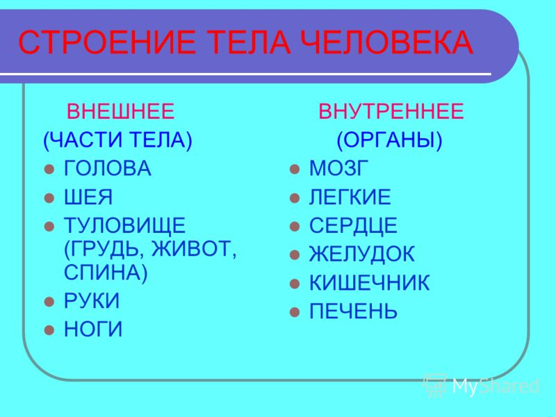 СТРОЕНИЕ ТЕЛА ЧЕЛОВЕКА ВНЕШНЕЕ (ЧАСТИ ТЕЛА) ГОЛОВА ШЕЯ ТУЛОВИЩЕ (ГРУДЬ, ЖИВОТ, СПИНА) РУКИ НОГИ ВНУТРЕННЕЕ (ОРГАНЫ) МОЗГ ЛЕГКИЕ СЕРДЦЕ ЖЕЛУДОК КИШЕЧНИК ПЕЧЕНЬ