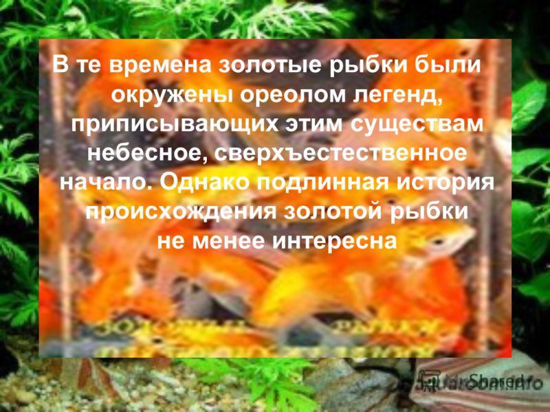 Альфред Брем писал, что первых золотых рыбок завезли в Европу в 1611 году. По другим сведениям, это произошло позднее. В Россию золотые рыбки попали в качестве диковинного подарка отцу Петра I царю Алексею Михайловичу Романову, большому любителю живо