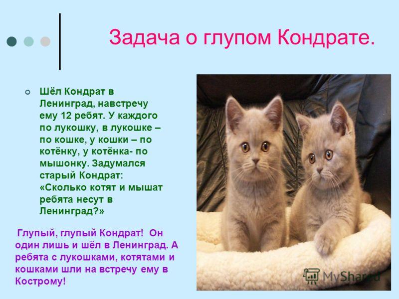 Задача о глупом Кондрате. Шёл Кондрат в Ленинград, навстречу ему 12 ребят. У каждого по лукошку, в лукошке – по кошке, у кошки – по котёнку, у котёнка- по мышонку. Задумался старый Кондрат: «Сколько котят и мышат ребята несут в Ленинград?» Глупый, гл