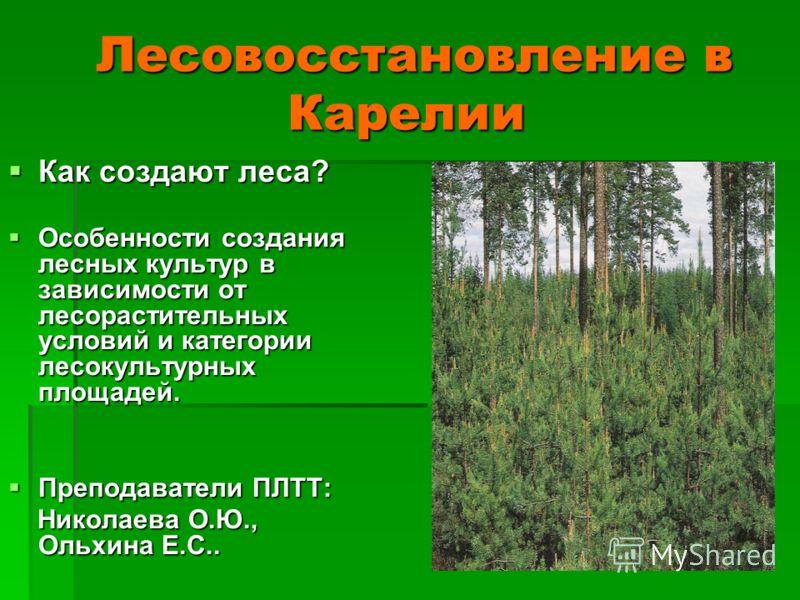 Лесовосстановление в Карелии Лесовосстановление в Карелии Как создают леса? Как создают леса? Особенности создания лесных культур в зависимости от лесорастительных условий и категории лесокультурных площадей. Особенности создания лесных культур в зав