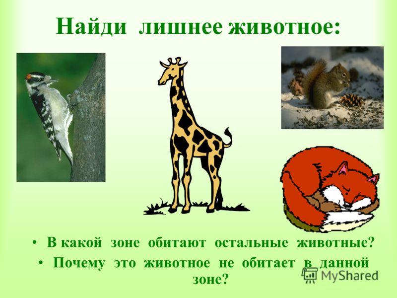 Найди лишнее животное: В какой зоне обитают остальные животные? Почему это животное не обитает в данной зоне?