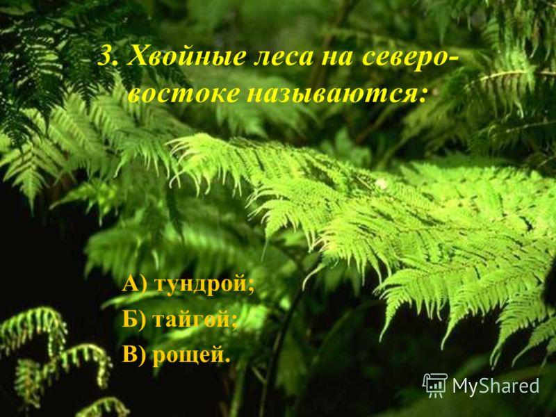 3. Хвойные леса на северо- востоке называются: А) тундрой; Б) тайгой; В) рощей.