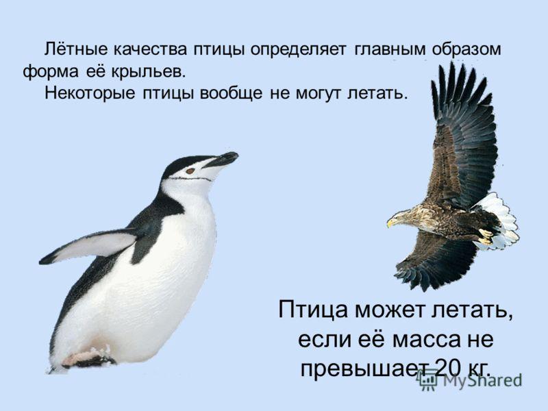 Птица может летать, если её масса не превышает 20 кг. Лётные качества птицы определяет главным образом форма её крыльев. Некоторые птицы вообще не могут летать.