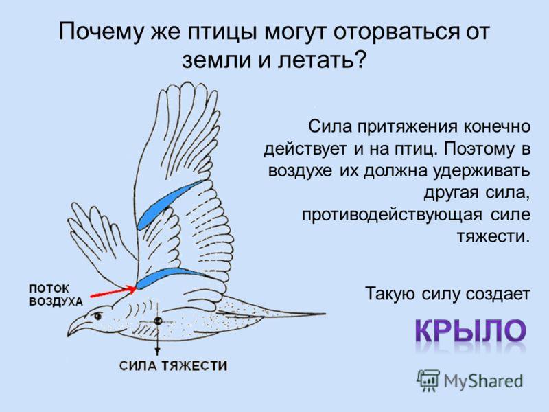 Сила притяжения конечно действует и на птиц. Поэтому в воздухе их должна удерживать другая сила, противодействующая силе тяжести. Почему же птицы могут оторваться от земли и летать? Такую силу создает