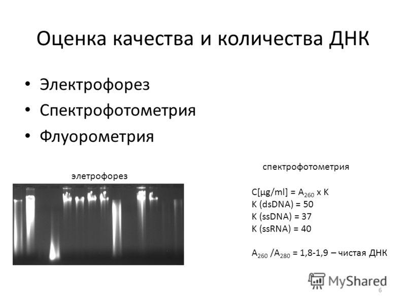 Оценка качества и количества ДНК Электрофорез Спектрофотометрия Флуорометрия элетрофорез спектрофотометрия С[µg/ml] = А 260 x K K (dsDNA) = 50 K (ssDNA) = 37 K (ssRNA) = 40 А 260 /А 280 = 1,8-1,9 – чистая ДНК 6