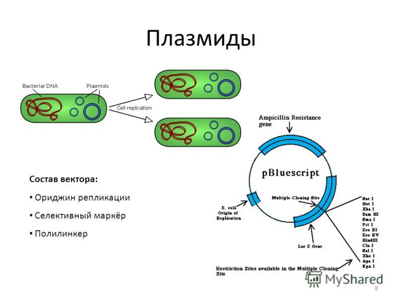 Плазмиды 8 Состав вектора: Ориджин репликации Селективный маркёр Полилинкер