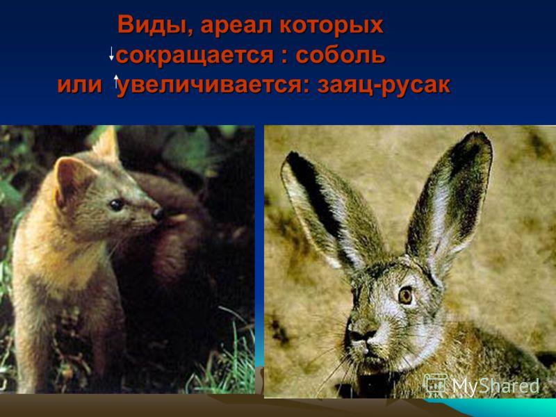 Виды, ареал которых сокращается : соболь или увеличивается: заяц-русак