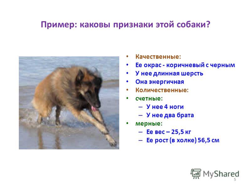 5 Пример: каковы признаки этой собаки? Качественные: Ее окрас - коричневый с черным У нее длинная шерсть Она энергичная Количественные: счетные: – У нее 4 ноги – У нее два брата мерные: – Ее вес – 25,5 кг – Ее рост (в холке) 56,5 см 5