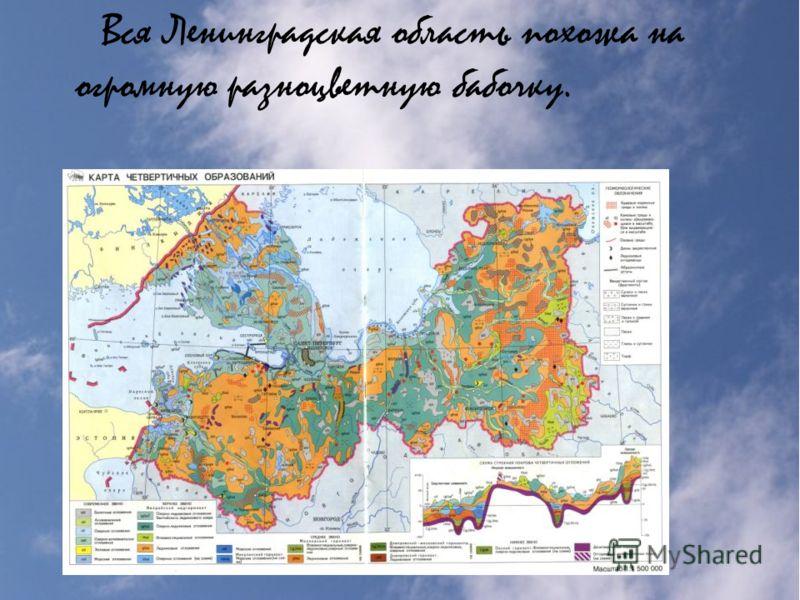 Вся Ленинградская область похожа на огромную разноцветную бабочку.