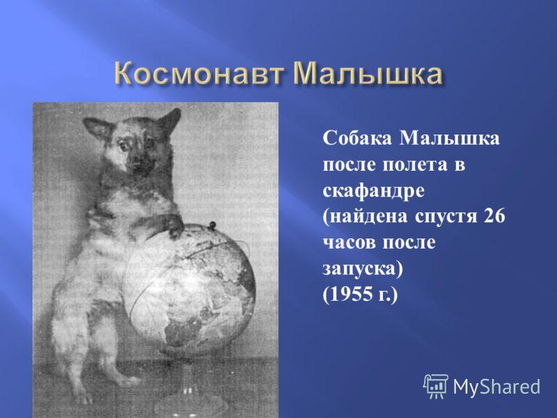 Собака Малышка после полета в скафандре ( найдена спустя 26 часов после запуска ) (1955 г.)