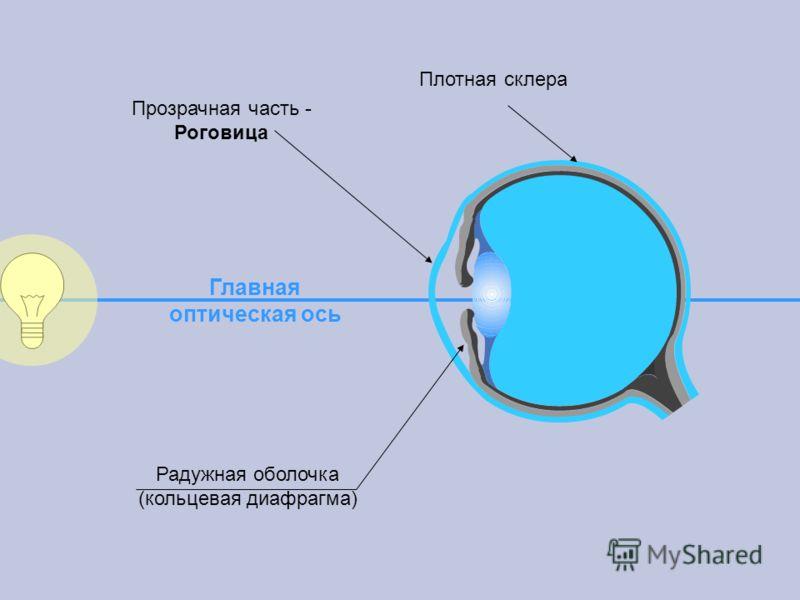 Главная оптическая ось Радужная оболочка (кольцевая диафрагма) Плотная склера Прозрачная часть - Роговица