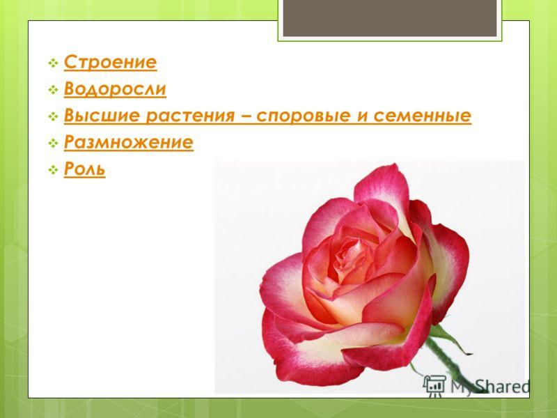 Роль растений в жизни природы и человека.