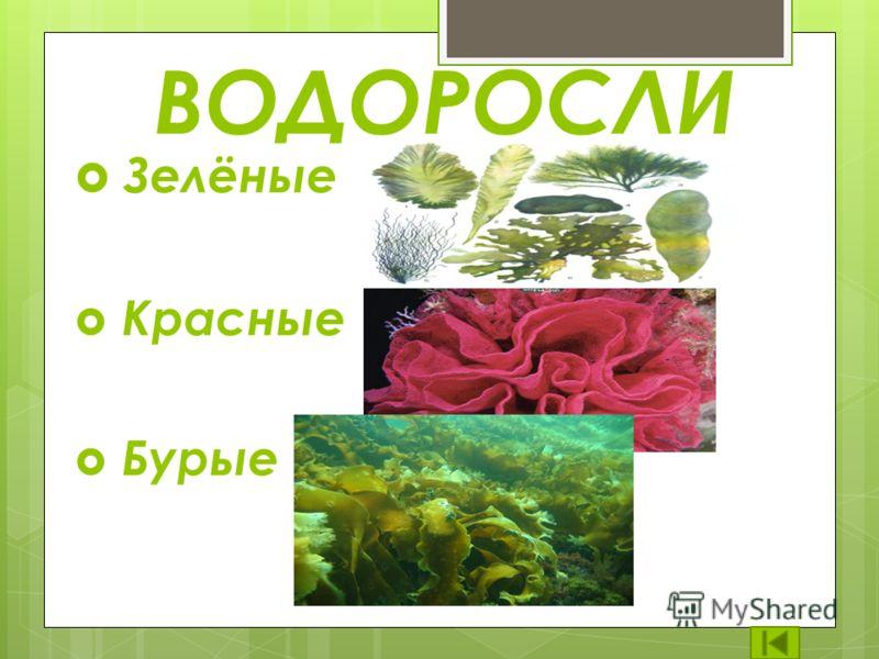 Растений в жизни природы и человека