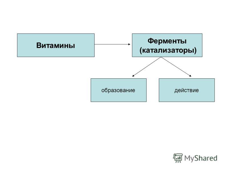 Витамины Ферменты (катализаторы) действиеобразование Витамины Ферменты (катализаторы)