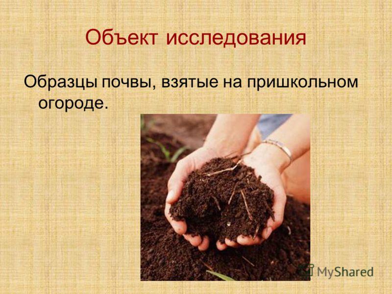 Объект исследования Образцы почвы, взятые на пришкольном огороде.