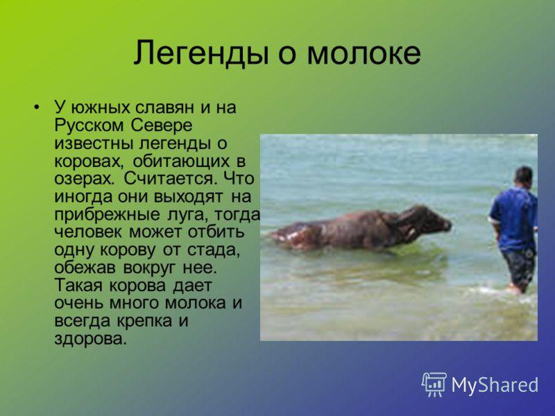 Легенды о молоке У южных славян и на Русском Севере известны легенды о коровах, обитающих в озерах. Считается. Что иногда они выходят на прибрежные луга, тогда человек может отбить одну корову от стада, обежав вокруг нее. Такая корова дает очень мног