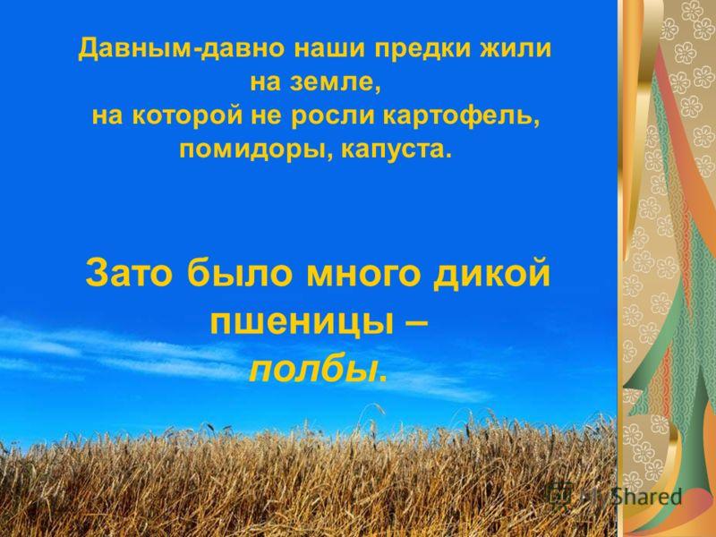 Давным-давно наши предки жили на земле, на которой не росли картофель, помидоры, капуста. Зато было много дикой пшеницы – полбы.