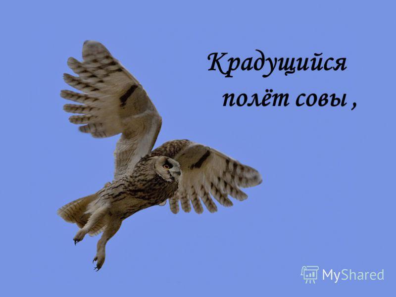 Крадущийся полёт совы,