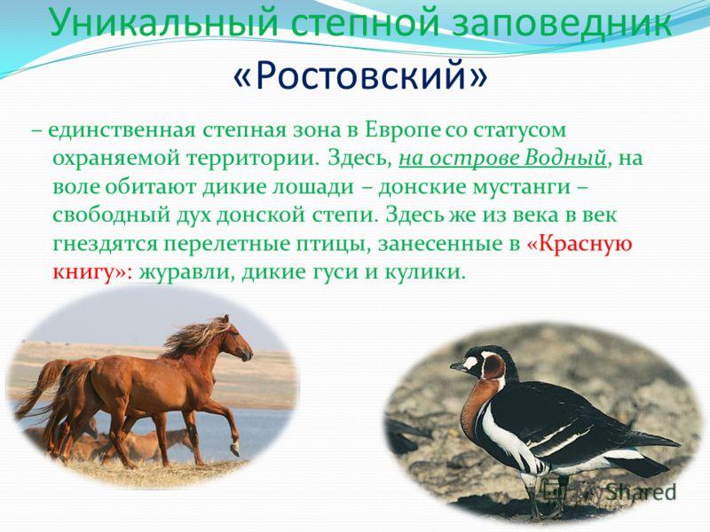 Уникальный степной заповедник «Ростовский» – единственная степная зона в Европе со статусом охраняемой территории. Здесь, на острове Водный, на воле обитают дикие лошади – донские мустанги – свободный дух донской степи. Здесь же из века в век гнездят