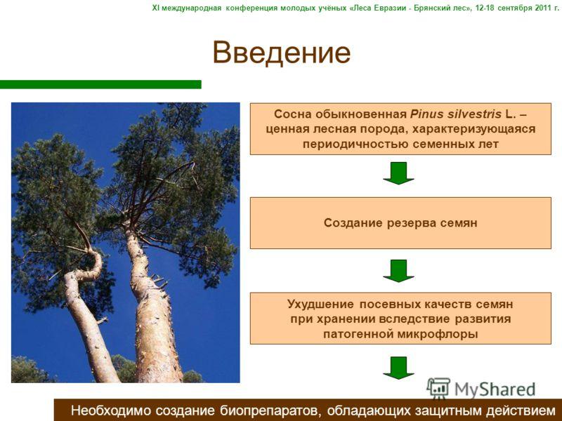 Введение Необходимо создание биопрепаратов, обладающих защитным действием Сосна обыкновенная Pinus silvestris L. – ценная лесная порода, характеризующаяся периодичностью семенных лет Создание резерва семян Ухудшение посевных качеств семян при хранени