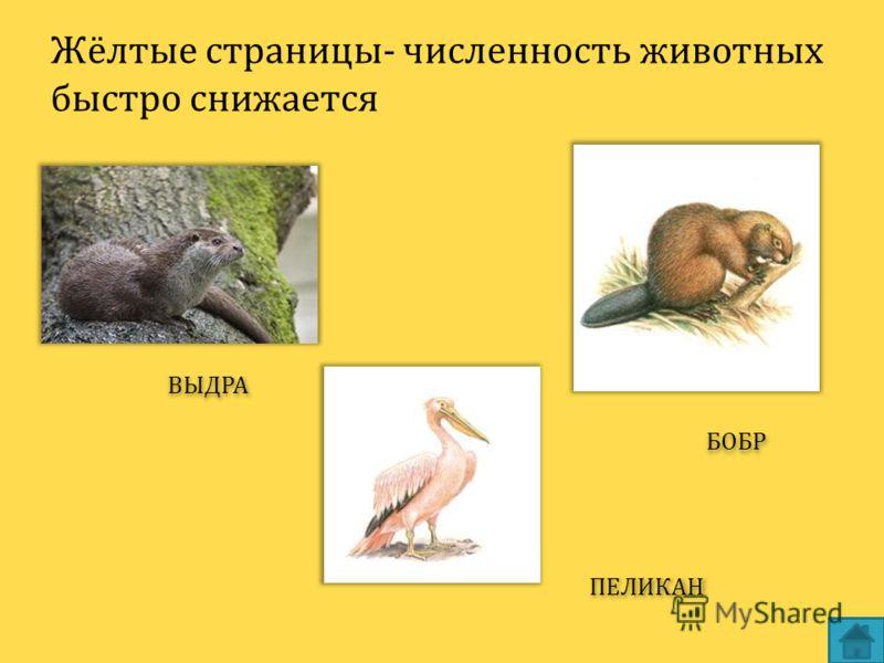 Жёлтые страницы- численность животных быстро снижается