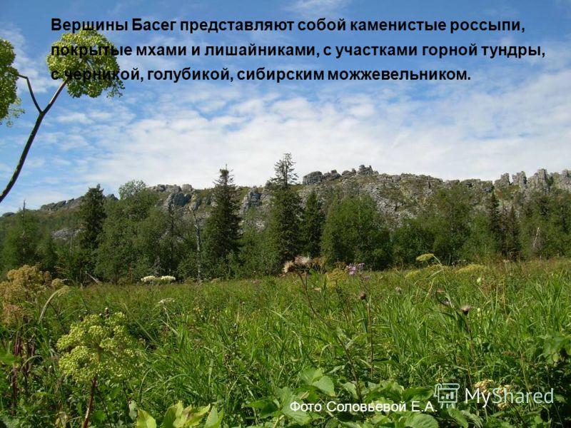 Вершины Басег представляют собой каменистые россыпи, покрытые мхами и лишайниками, с участками горной тундры, с черникой, голубикой, сибирским можжевельником. Фото Соловьевой Е.А.