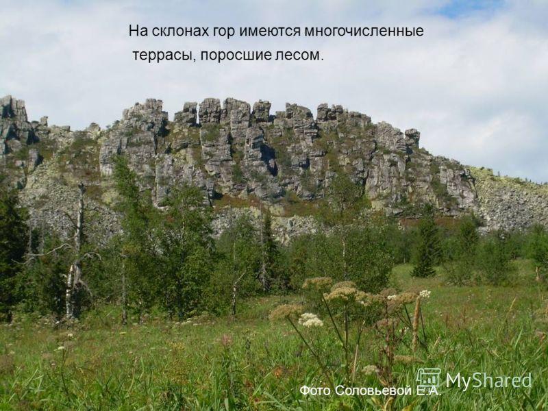 На склонах гор имеются многочисленные террасы, поросшие лесом. Фото Соловьевой Е.А.
