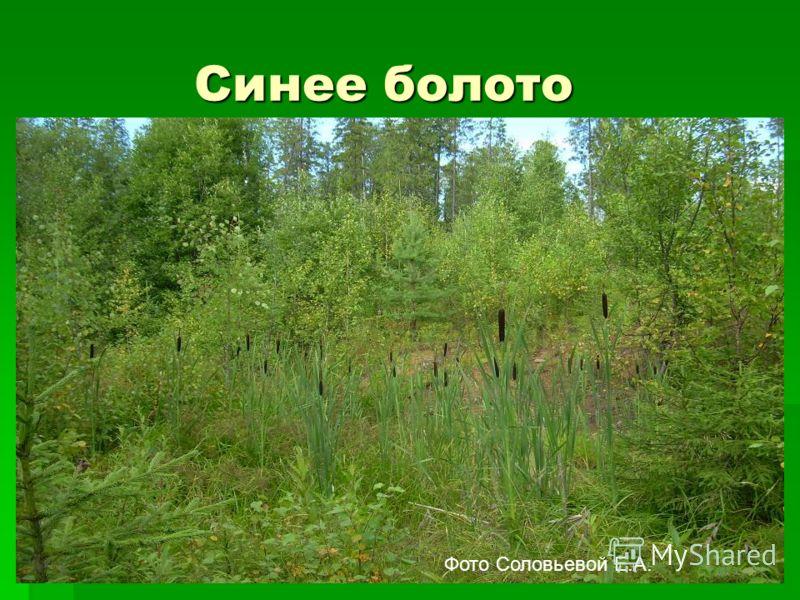 Синее болото Синее болото Фото Соловьевой Е.А.