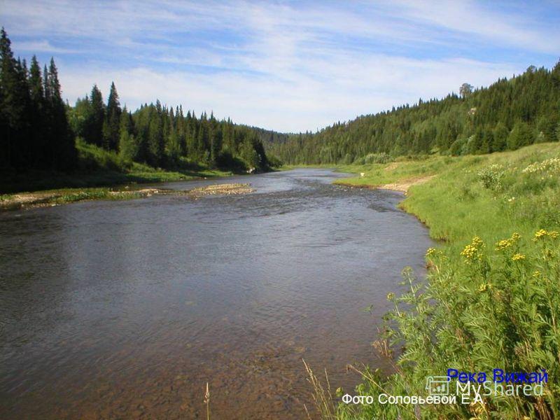 Река Вижай Фото Соловьевой Е.А.