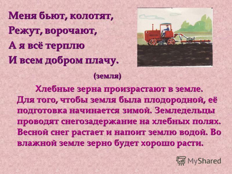 Меня бьют, колотят, Режут, ворочают, А я всё терплю И всем добром плачу. (земля) (земля) Хлебные зерна произрастают в земле. Для того, чтобы земля была плодородной, её подготовка начинается зимой. Земледельцы проводят снегозадержание на хлебных полях