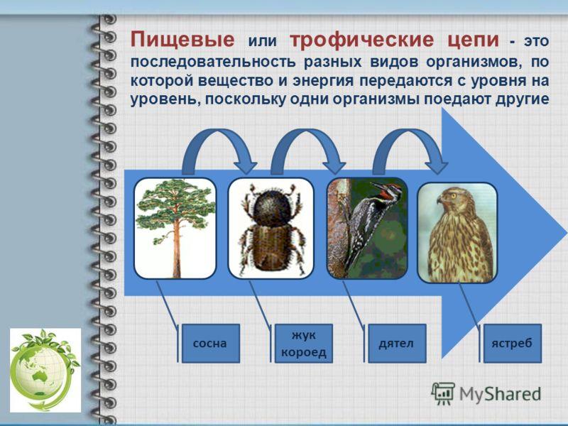 сосна жук короед дятелястреб Пищевые или трофические цепи - это последовательность разных видов организмов, по которой вещество и энергия передаются с уровня на уровень, поскольку одни организмы поедают другие