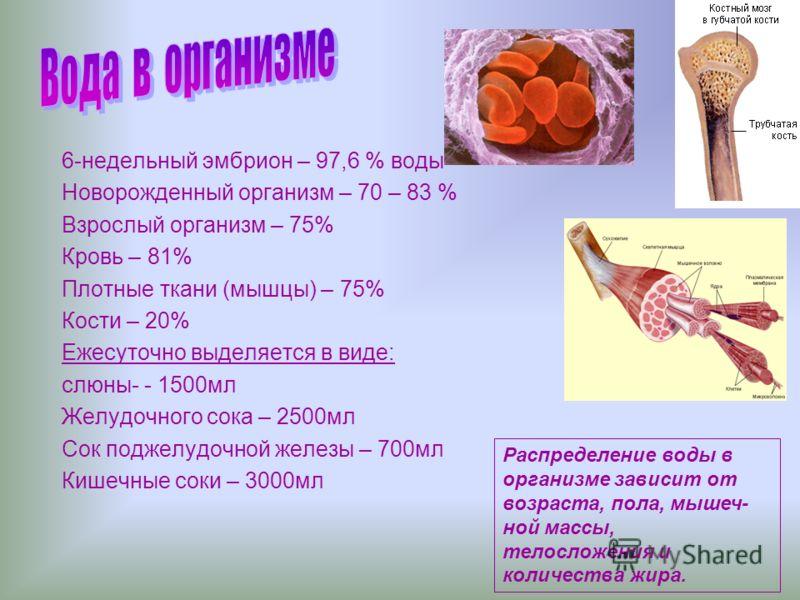 6-недельный эмбрион – 97,6 % воды Новорожденный организм – 70 – 83 % Взрослый организм – 75% Кровь – 81% Плотные ткани (мышцы) – 75% Кости – 20% Ежесуточно выделяется в виде: слюны- - 1500мл Желудочного сока – 2500мл Сок поджелудочной железы – 700мл