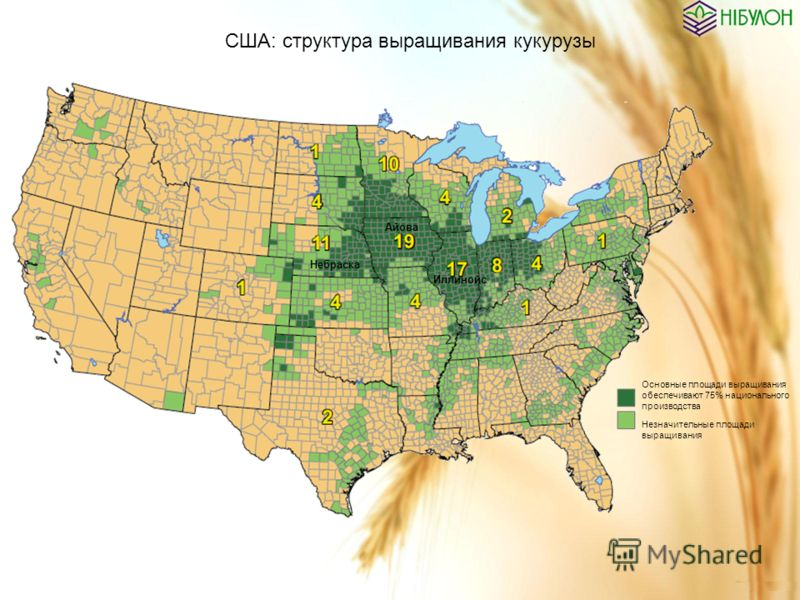 США: структура выращивания кукурузы Основные площади выращивания обеспечивают 75% национального производства Незначительные площади выращивания Айова Небраска Иллинойс