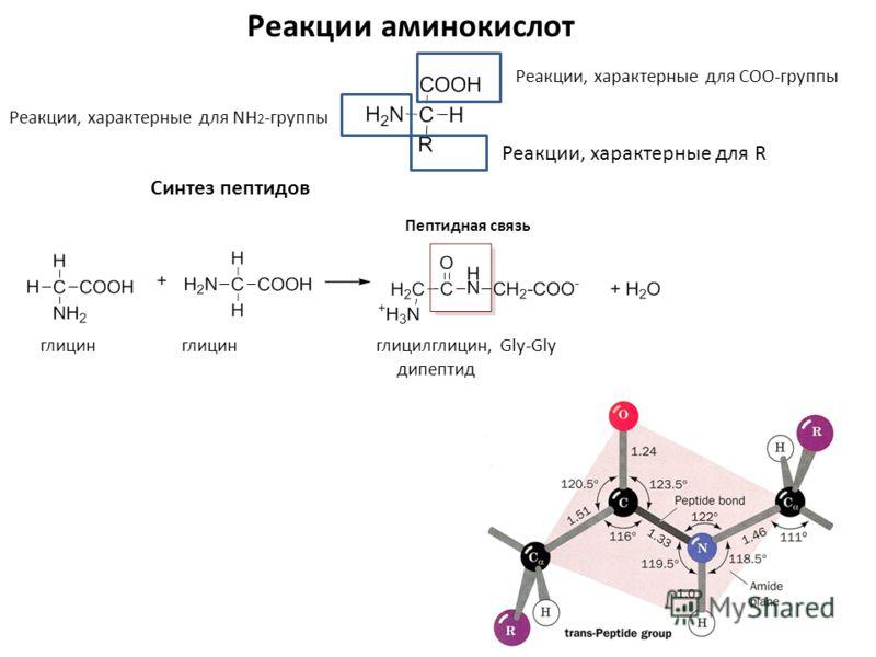 Gly-Gly дипептид Пептидная
