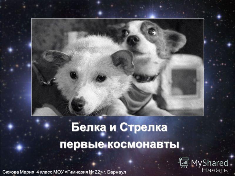Белка и Стрелка первые космонавты Сюкова Мария 4 класс МОУ «Гимназия 22» г. Барнаул