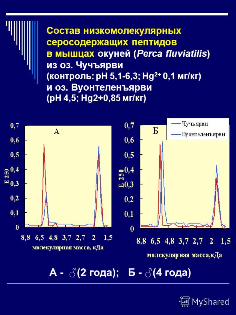 Cостав низкомолекулярных серосодержащих пептидов в мышцах окуней (Рerca fluviatilis) из оз. Чучъярви (контроль: рН 5,1-6,3; Hg 2+ 0,1 мг/кг) и оз. Вуонтеленъярви (рН 4,5; Hg2+0,85 мг/кг) А - (2 года); Б - (4 года)