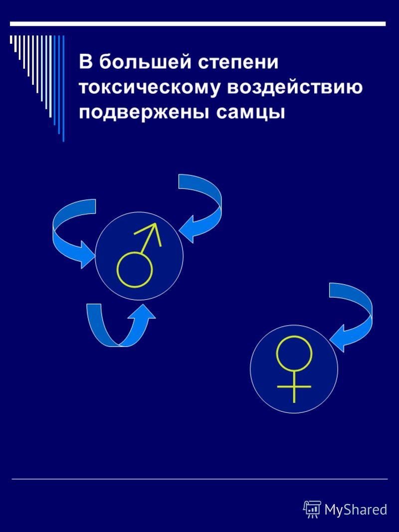 В большей степени токсическому воздействию подвержены самцы