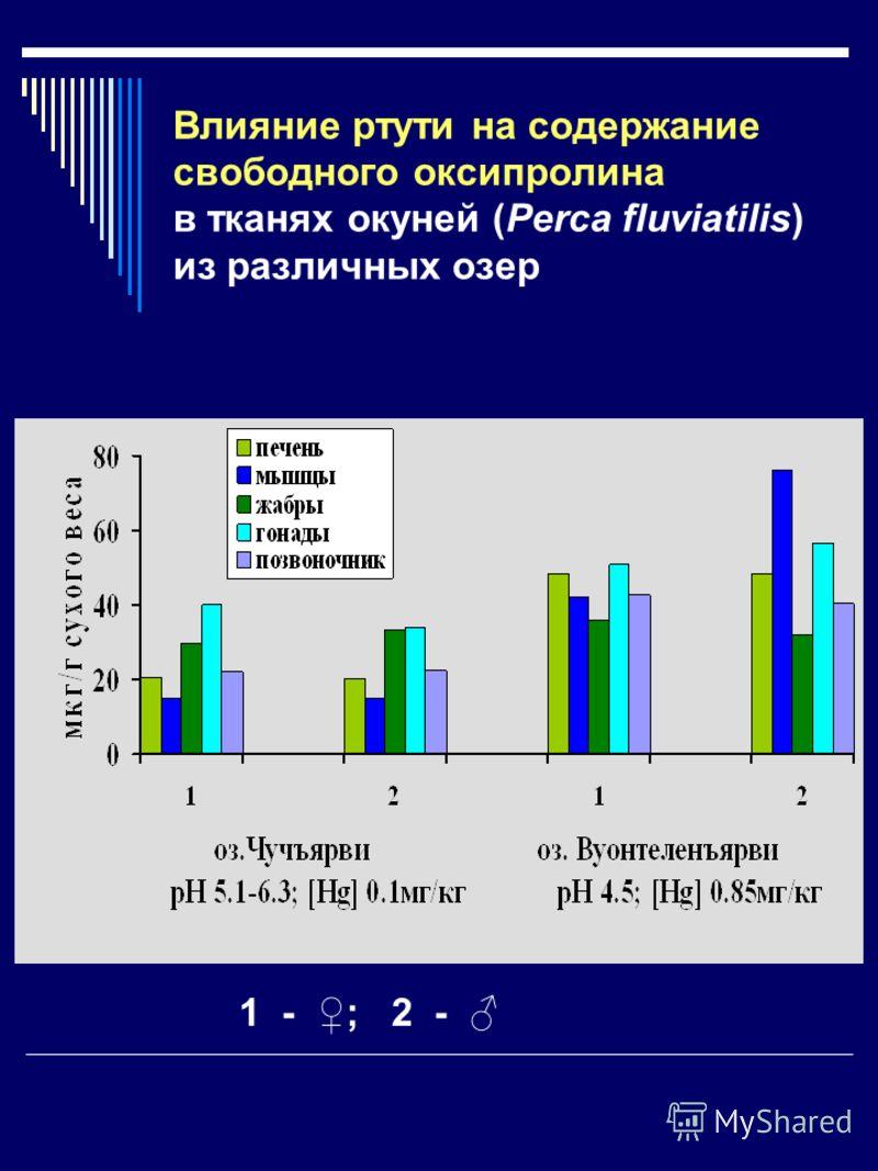 Влияние ртути на содержание свободного оксипролина в тканях окуней (Perca fluviatilis) из различных озер 1 - ; 2 -