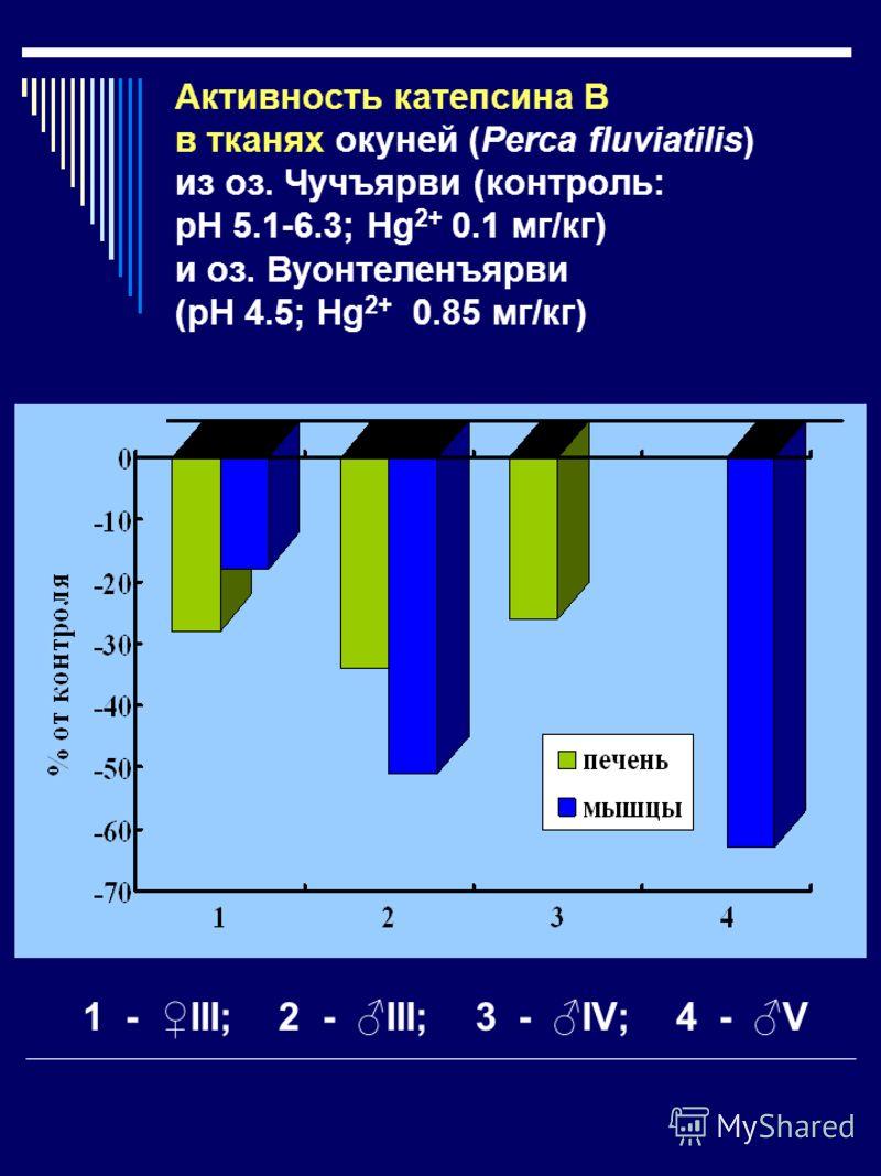 Активность катепсина B в тканях окуней (Рerca fluviatilis) из оз. Чучъярви (контроль: рН 5.1-6.3; Hg 2+ 0.1 мг/кг) и оз. Вуонтеленъярви (рН 4.5; Hg 2+ 0.85 мг/кг) 1 - III; 2 - III; 3 - IV; 4 - V