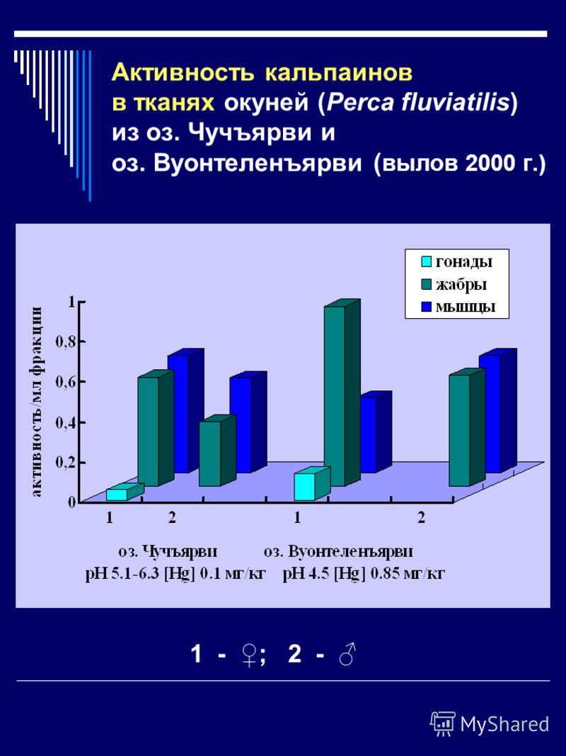 Активность кальпаинов в тканях окуней (Perca fluviatilis) из оз. Чучъярви и оз. Вуонтеленъярви ( вылов 2000 г.) 1 - ; 2 -