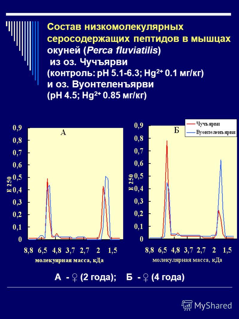 Состав низкомолекулярных серосодержащих пептидов в мышцах окуней (Perca fluviatilis) из оз. Чучъярви (контроль: рН 5.1-6.3; Hg 2+ 0.1 мг/кг) и оз. Вуонтеленъярви (рН 4.5; Hg 2+ 0.85 мг/кг) А - (2 года); Б - (4 года)