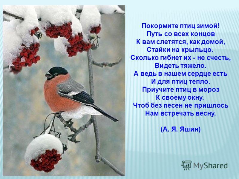 Покормите птиц зимой! Путь со всех концов К вам слетятся, как домой, Стайки на крыльцо. Сколько гибнет их - не счесть, Видеть тяжело. А ведь в нашем сердце есть И для птиц тепло. Приучите птиц в мороз К своему окну. Чтоб без песен не пришлось Нам вст