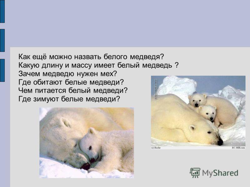 Как ещё можно назвать белого медведя? Какую длину и массу имеет белый медведь ? Зачем медведю нужен мех? Где обитают белые медведи? Чем питается белый медведи? Где зимуют белые медведи?