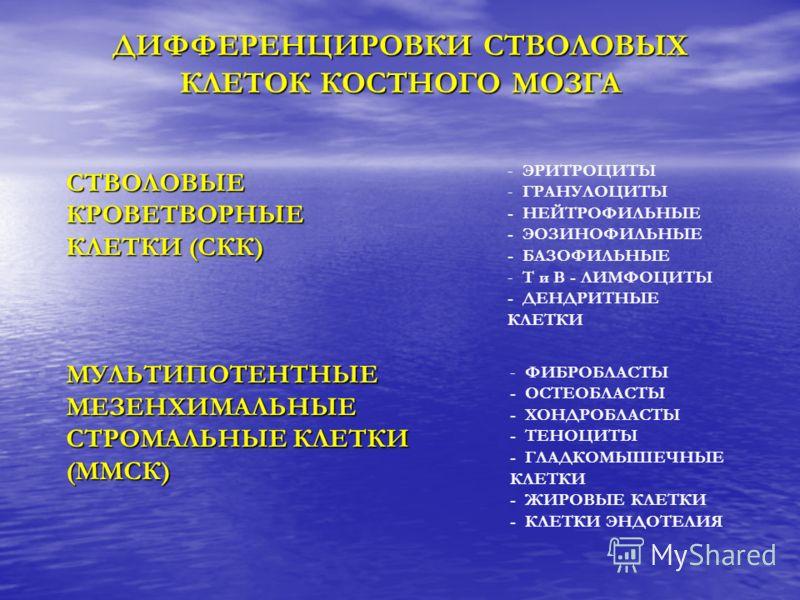 ДИФФЕРЕНЦИРОВКИ СТВОЛОВЫХ КЛЕТОК КОСТНОГО МОЗГА СТВОЛОВЫЕКРОВЕТВОРНЫЕ КЛЕТКИ (СКК) МУЛЬТИПОТЕНТНЫЕМЕЗЕНХИМАЛЬНЫЕ СТРОМАЛЬНЫЕ КЛЕТКИ (ММСК) - - ЭРИТРОЦИТЫ - - ГРАНУЛОЦИТЫ - НЕЙТРОФИЛЬНЫЕ - ЭОЗИНОФИЛЬНЫЕ - БАЗОФИЛЬНЫЕ - - Т и В - ЛИМФОЦИТЫ - ДЕНДРИТНЫЕ
