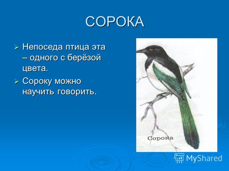 Презентация по теме птицы наши