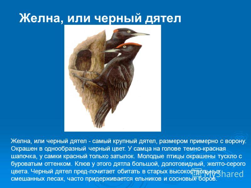 Длиннохвостая синица Длиннохвостая синица - одна из мелких толстоклювых синиц, весит 8-9 г. Оперение ее очень пушистое, издали птичка кажется шариком с длинных хвостом. Напоминает она разливательную ложку, поэтому народное название этой синички - опо