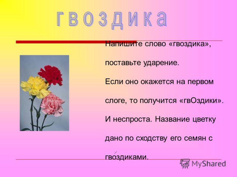 Напишите слово «гвоздика», поставьте ударение. Если оно окажется на первом слоге, то получится «гвОздики». И неспроста. Название цветку дано по сходству его семян с гвоздиками.